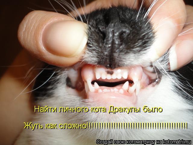 Котоматрица: Найти личного кота Дракулы было Жуть как сложно!!!!!!!!!!!!!!!!!!!!!!!!!!!!!!!!!!!!!!!!!!