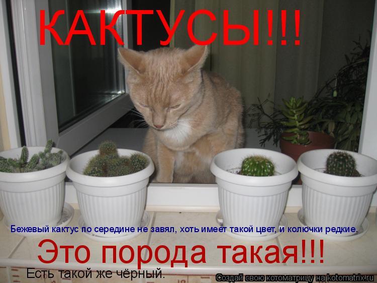 Котоматрица: КАКТУСЫ!!! Бежевый кактус по середине не завял, хоть имеет такой цвет, и колючки редкие. Это порода такая!!! Есть такой же чёрный.