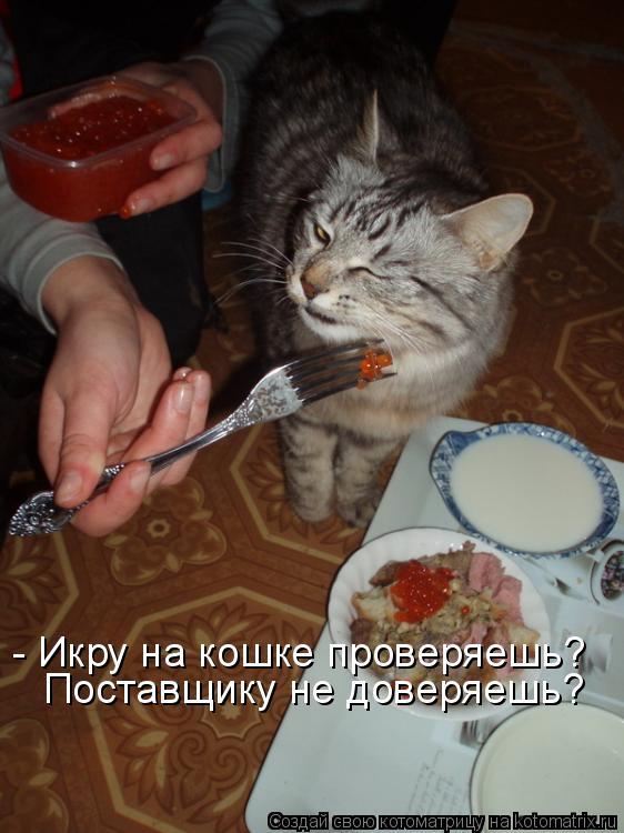 Котоматрица - - Икру на кошке проверяешь? Поставщику не доверяешь?