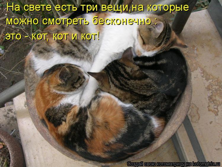 Котоматрица - На свете есть три вещи,на которые можно смотреть бесконечно : это - ко