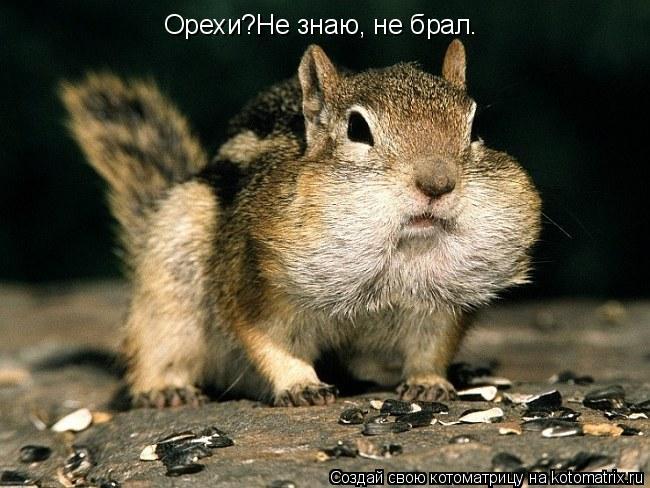 Котоматрица: Орехи?Не знаю, не брал.