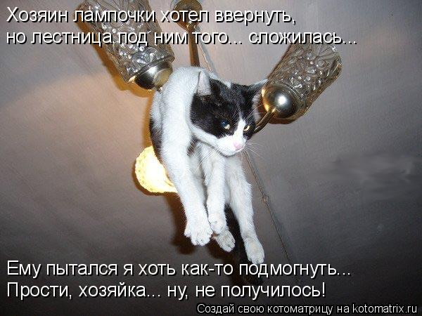 Котоматрица - Хозяин лампочки хотел ввернуть, но лестница под ним того... сложилась.