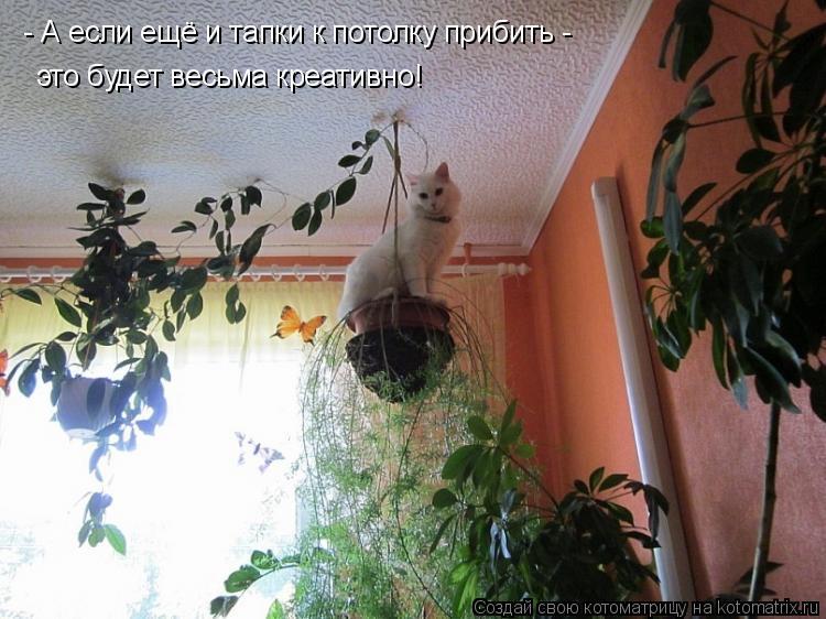 Котоматрица: - А если ещё и тапки к потолку прибить - это будет весьма креативно!