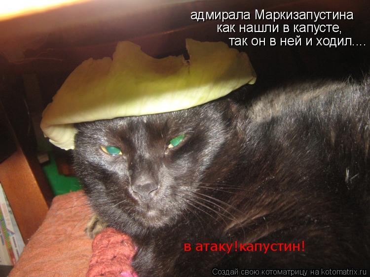 Котоматрица: адмирала Маркизапустина как нашли в капусте, так он в ней и ходил.... в атаку!капустин!