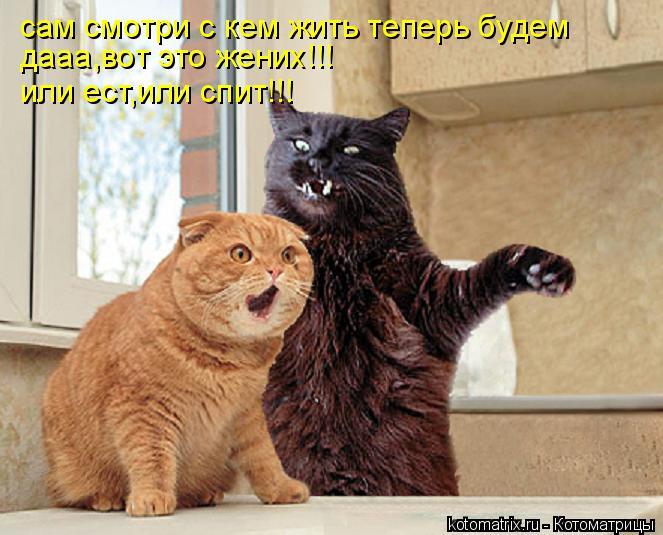 Котоматрица: сам смотри с кем жить теперь будем дааа,вот это жених!!! или ест,или спит!!!