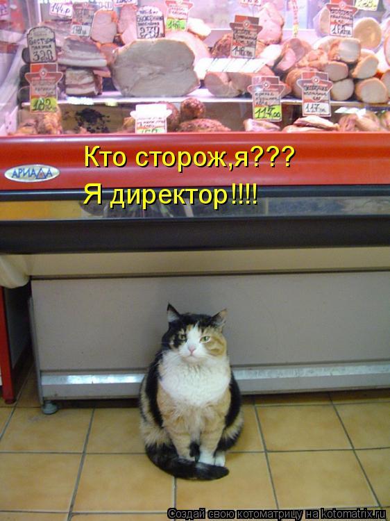 Котоматрица: Кто сторож,я??? Я директор!!!!