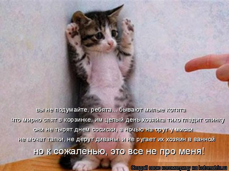 котята картинки смешные и милые
