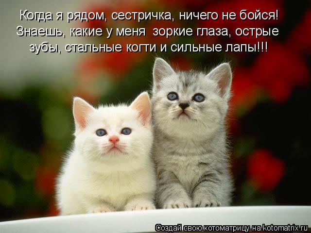 Котоматрица: Когда я рядом, сестричка, ничего не бойся! Знаешь, какие у меня  зоркие глаза, острые  зубы, стальные когти и сильные лапы!!!