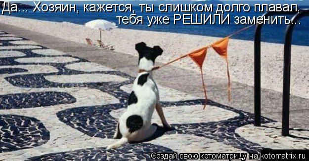 Котоматрица: Да... Хозяин, кажется, ты слишком долго плавал, тебя уже РЕШИЛИ заменить...