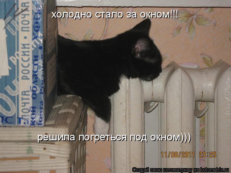 Котоматрица: холодно стало за окном!!! решила погреться под окном)))