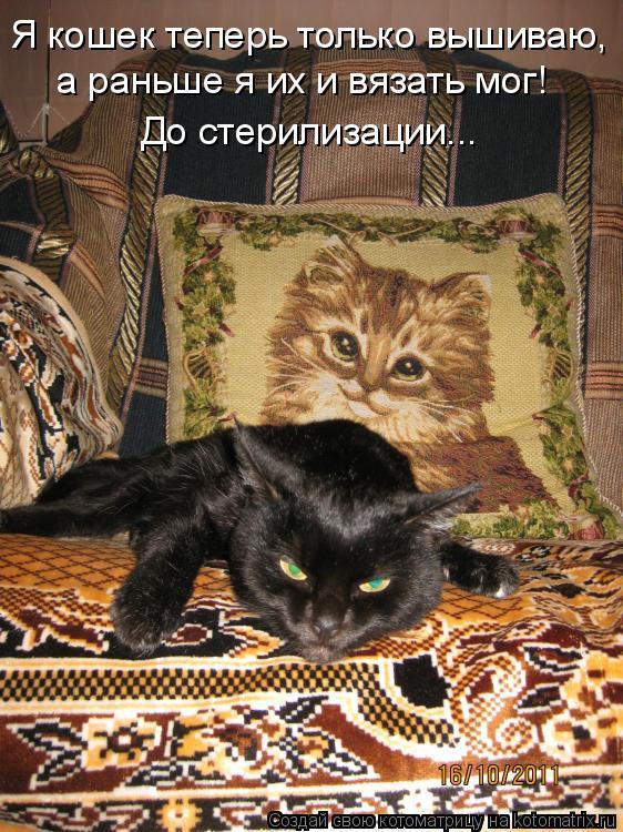 Котоматрица - Я кошек теперь только вышиваю, а раньше я их и вязать мог! До стерилиз