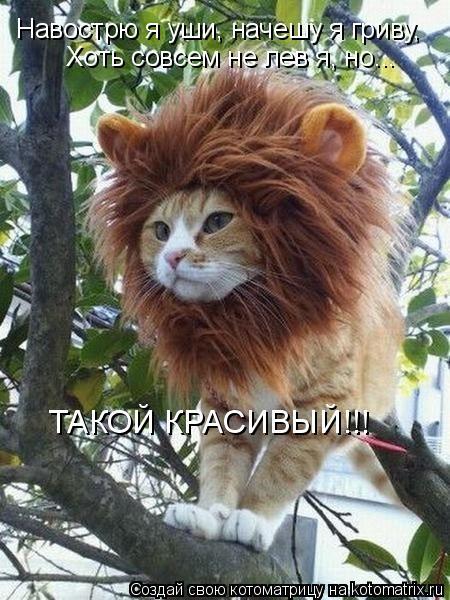 Котоматрица: Навострю я уши, начешу я гриву,  Хоть совсем не лев я, но...  ТАКОЙ КРАСИВЫЙ!!!