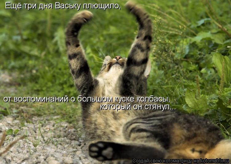 Котоматрица - Ещё три дня Ваську плющило, от воспоминаний о большом куске колбасы, к