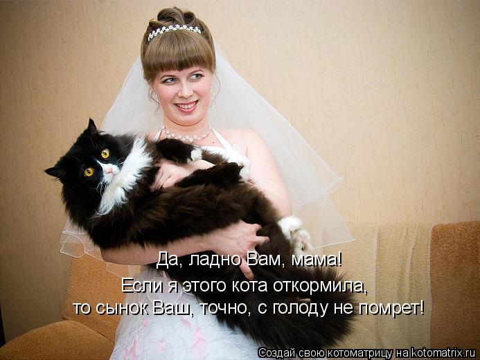 Котоматрица: Да, ладно Вам, мама!  Если я этого кота откормила,  то сынок Ваш, точно, с голоду не помрет!