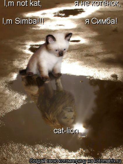 Котоматрица: I,m not kat, I,m Simba!!! я не котёнок, я Симба! cat-lion