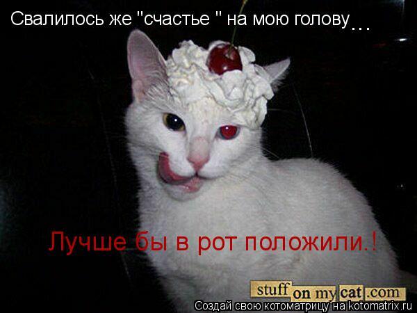 """Котоматрица: Свалилось же """"счастье """" на мою голову Лучше бы в рот положили.! ..."""