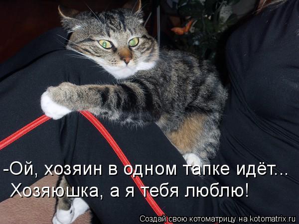 Котоматрица: -Ой, хозяин в одном тапке идёт... Хозяюшка, а я тебя люблю!