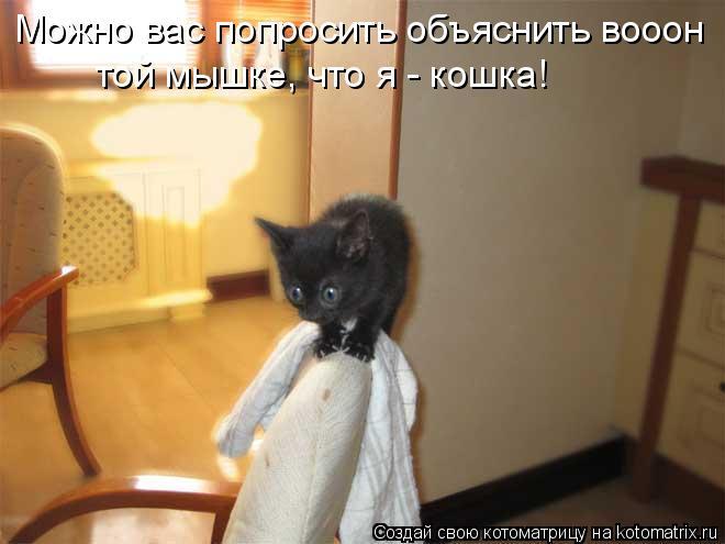 Можно вас попросить объяснить вооон той мышке, что я - кошка!