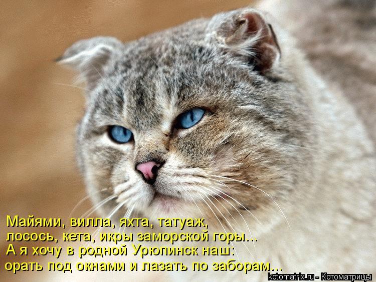 Котоматрица: Майями, вилла, яхта, татуаж, лосось, кета, икры заморской горы... А я хочу в родной Урюпинск наш: орать под окнами и лазать по заборам...