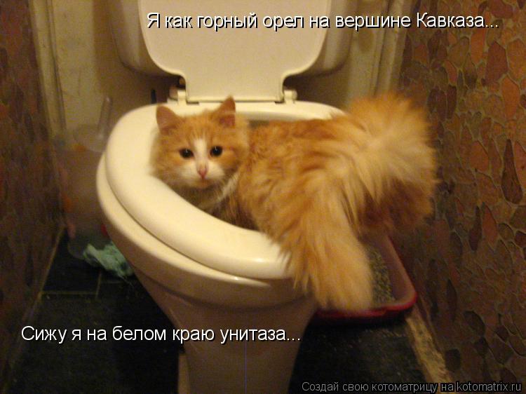 Котоматрица: Я как горный орел на вершине Кавказа... Сижу я на белом краю унитаза...