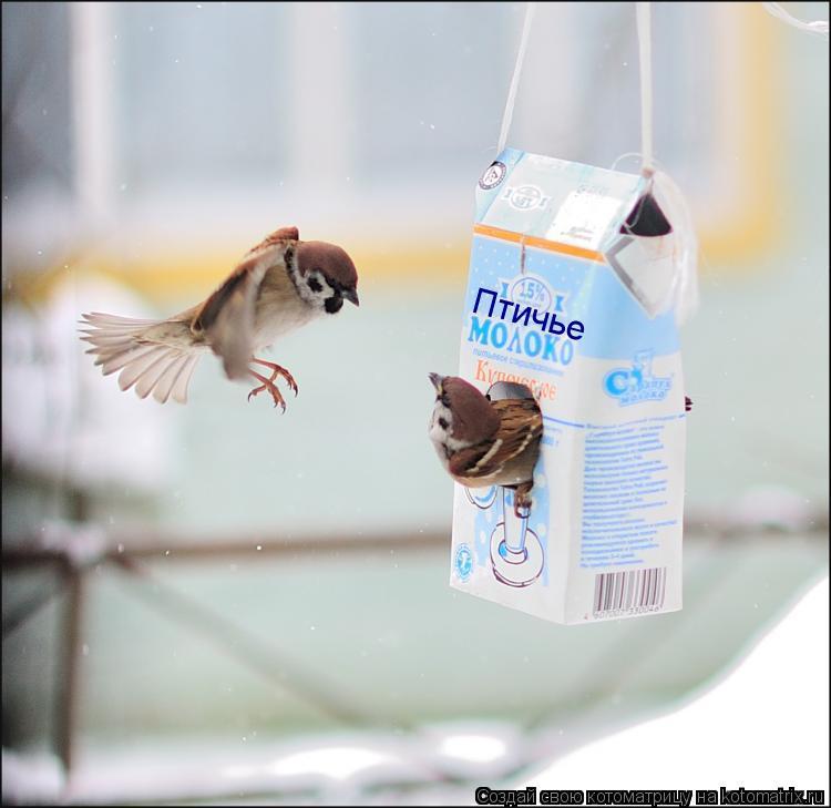 Котоматрица: Птичье