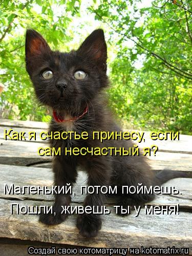 Котоматрица: Как я счастье принесу, если  сам несчастный я? Маленький, потом поймешь. Пошли, живешь ты у меня!