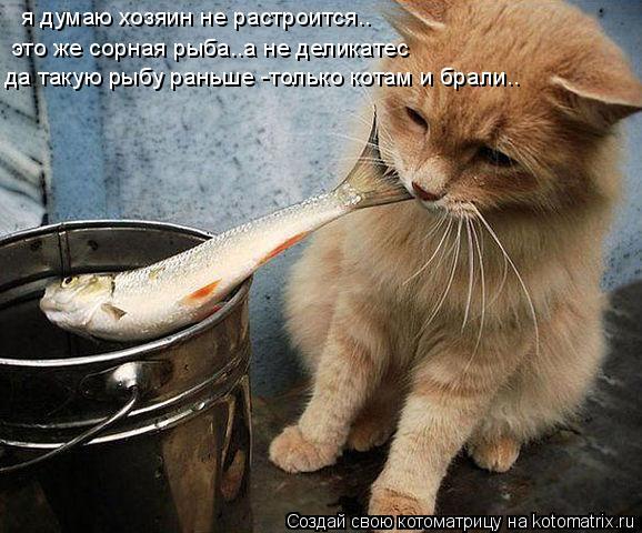Котоматрица: я думаю хозяин не растроится.. это же сорная рыба..а не деликатес да такую рыбу раньше -только котам и брали..