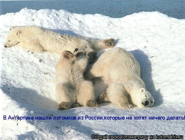 Котоматрица: В Антартике нашли потомков из России,которые не хотят ничего делать!