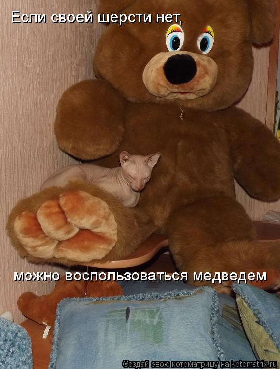 Котоматрица: Если своей шерсти нет, можно воспользоваться медведем