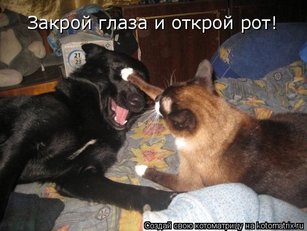Котоматрица: Закрой глаза и открой рот!