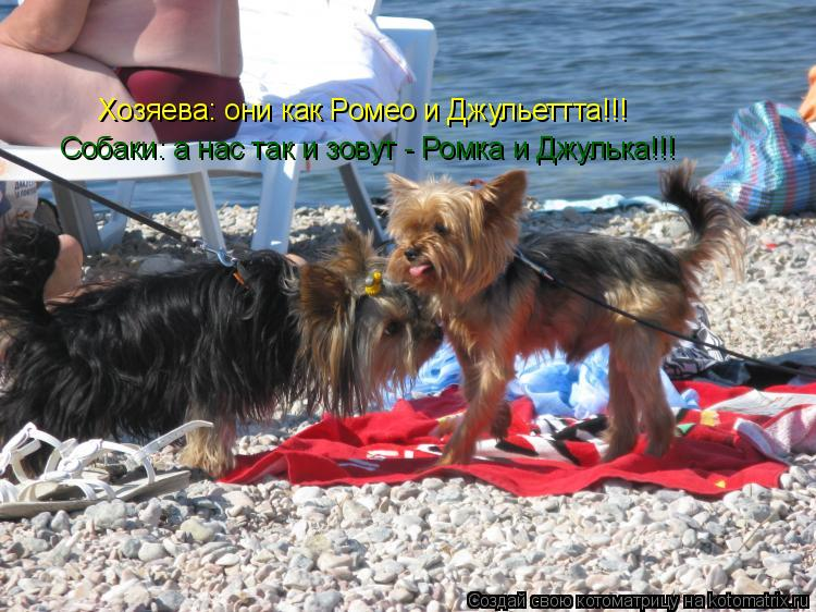 Котоматрица: Хозяева: они как Ромео и Джульеттта!!! Собаки: а нас так и зовут - Ромка и Джулька!!!