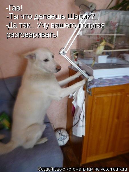 Котоматрица: -Гав! -Ты что делаешь,Шарик? -Да так...Учу вашего попугая  разговаривать!