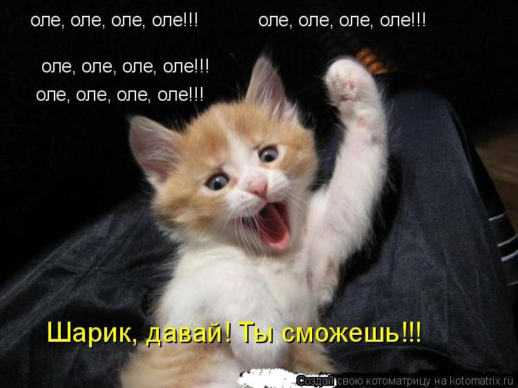 Котоматрица: оле, оле, оле, оле!!! оле, оле, оле, оле!!! оле, оле, оле, оле!!! оле, оле, оле, оле!!! Шарик, давай! Ты сможешь!!!
