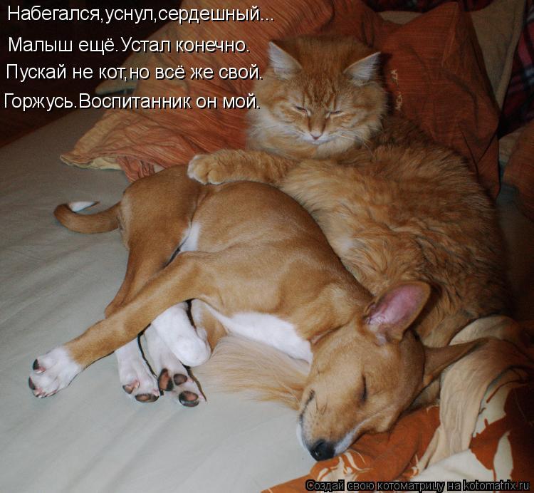 Котоматрица - Набегался,уснул,сердешный... Малыш ещё.Устал конечно. Пускай не кот,но