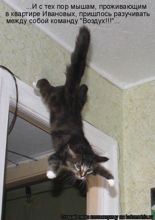 Котоматрица - ...И с тех пор мышам, проживающим в квартире Ивановых, пришлось разучи