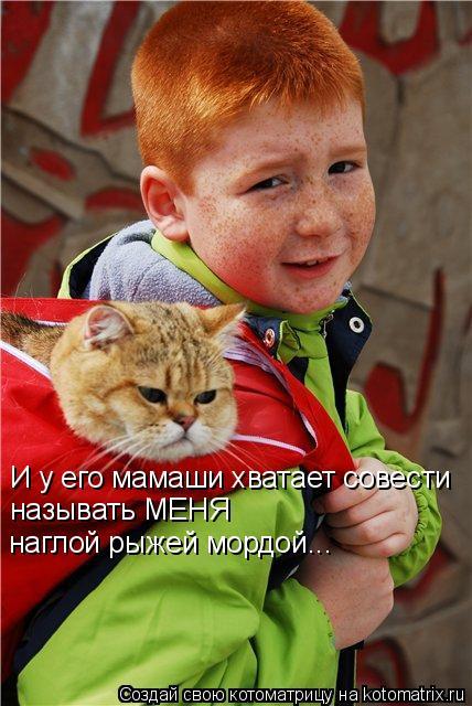Котоматрица: И у его мамаши хватает совести называть МЕНЯ  наглой рыжей мордой...