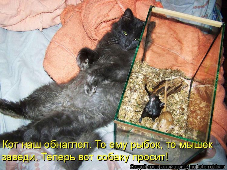Котоматрица - Кот наш обнаглел. То ему рыбок, то мышек заведи. Теперь вот собаку про