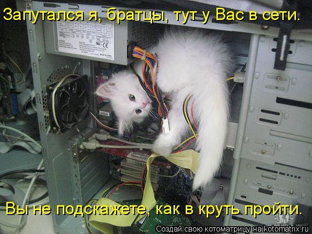 Котоматрица: Запутался я, братцы, тут у Вас в сети. Вы не подскажете, как в круть пройти.