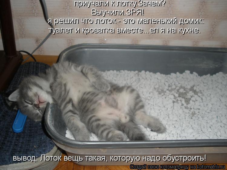 Котоматрица: Выучили.ЗРЯ! приучали к лотку.Зачем? я решил что лоток - это маленький домик: туалет и кроватка вместе...ел я на кухне. вывод: Лоток вещь такая,