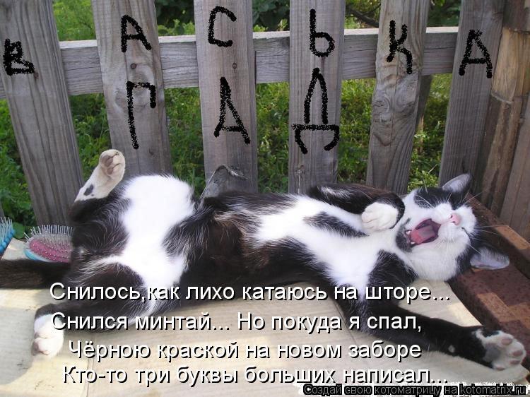 Котоматрица - Снилось,как лихо катаюсь на шторе... Снился минтай... Но покуда я спал