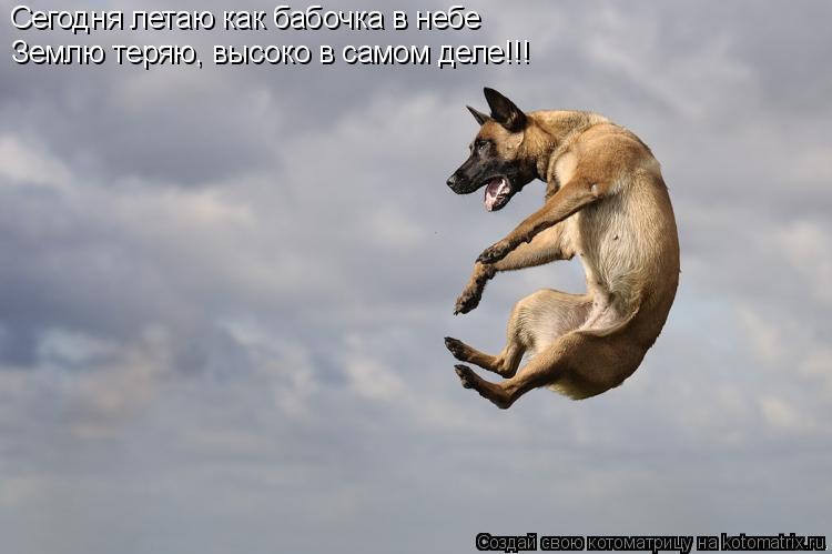 Котоматрица: Сегодня летаю как бабочка в небе  Землю теряю, высоко в самом деле!!!