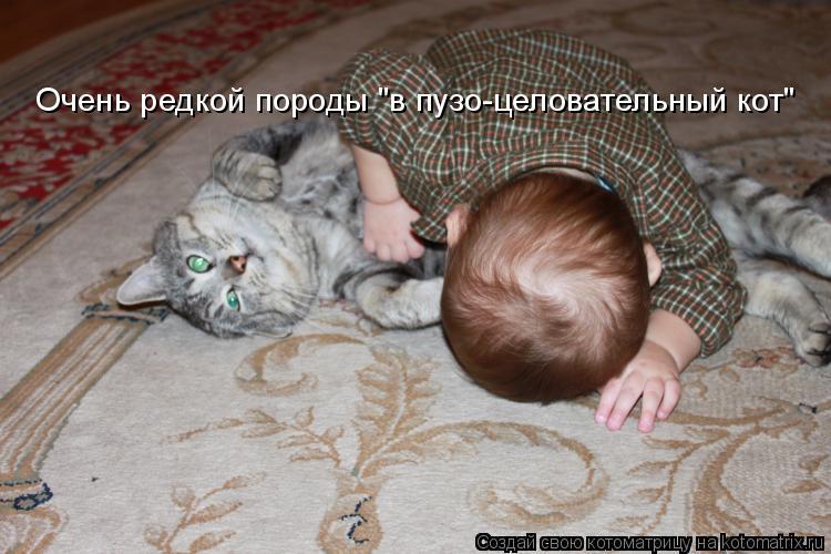 """Котоматрица: Очень редкой породы """"в пузо-целовательный кот"""""""