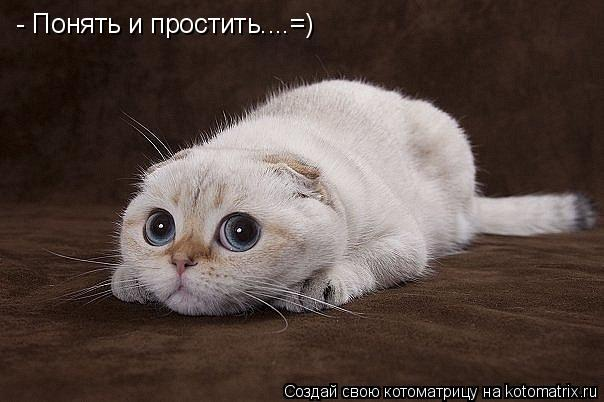 Котоматрица: - Понять и простить....=)