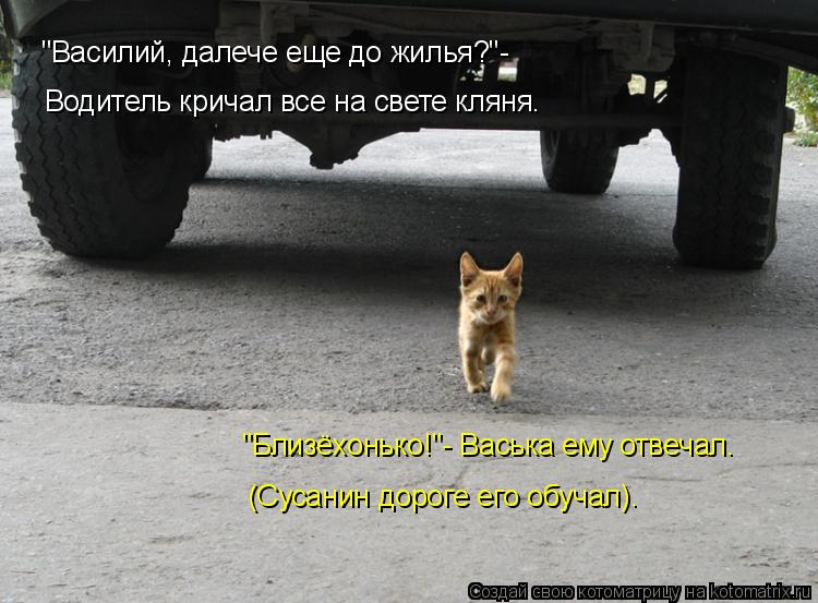 """Котоматрица: """"Василий, далече еще до жилья?""""- Водитель кричал все на свете кляня. """"Близёхонько!""""- Васька ему отвечал. (Сусанин дороге его обучал)."""