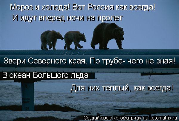 Котоматрица: Мороз и холода! Вот Россия как всегда! И идут вперед ночи на пролет Звери Северного края. По трубе- чего не зная! В океан Большого льда Для них