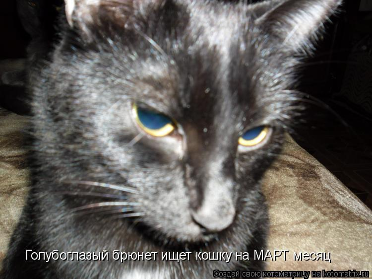 Котоматрица: Голубоглазый брюнет ищет кошку на МАРТ месяц