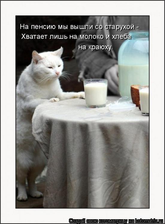 Котоматрица: На пенсию мы вышли со старухой - Хватает лишь на молоко и хлеба на краюху.