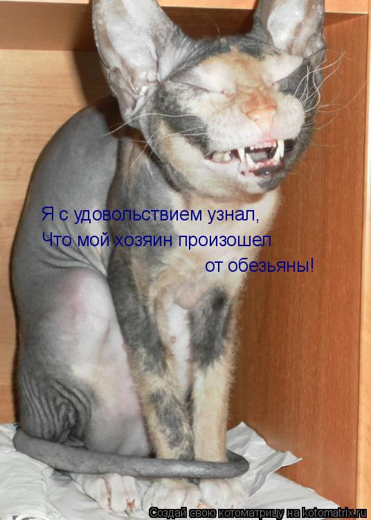 Котоматрица: Я с удовольствием узнал, Что мой хозяин произошел от обезьяны!