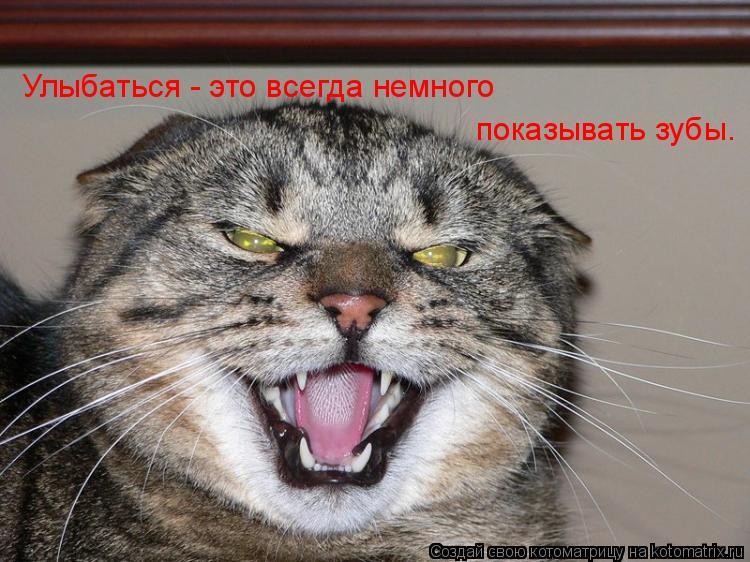Котоматрица: Улыбаться - это всегда немного показывать зубы.