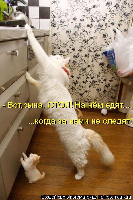 Котоматрица: - Вот,сына, СТОЛ! На нём едят... ...когда за нами не следят!